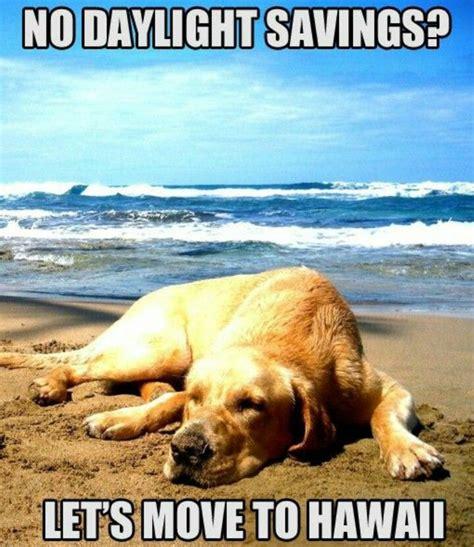 Pin On Hawaii Memes