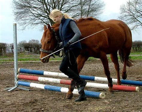 Bodenarbeit Pferd  Bodenarbeit Pferd Einebinsenweisheit