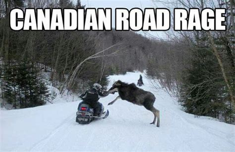Canadian Moose Meme - my money is on the moose canadian eh pinterest moose humor and funny pics