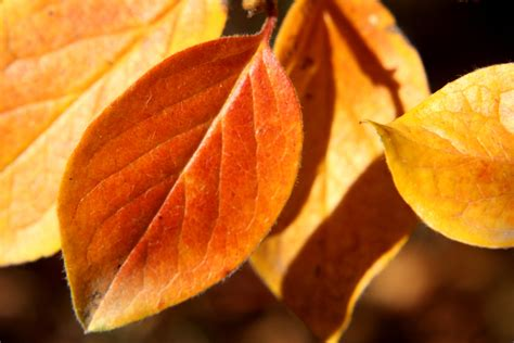 Autumn Leaves Close Up Picture   Free Photograph   Photos ...