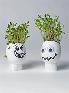 Was Kann Man In Ein Gewächshaus Pflanzen : basteln basteln mit eierschalen eierschale kresse und ~ Lizthompson.info Haus und Dekorationen