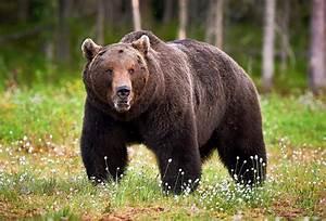 Diagram Of A Bear