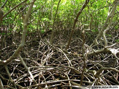 cuisiner du gibier la mangrove de martinique
