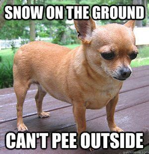 Chihuahua Meme - funny chihuahua memes google search my baby diego pinterest memes google search and google