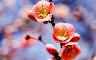 Spring Flower Flowers Wallpapers Macro Twig Bloom