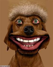 Funny Dog Smiling with Teeth