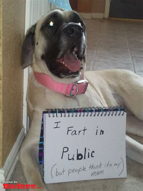 hilarious pictures  public dog shaming  humorous