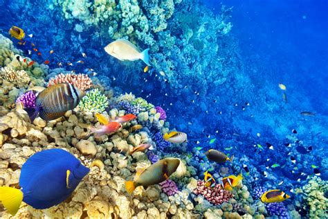 underwater world coral reef tropical fishes ocean