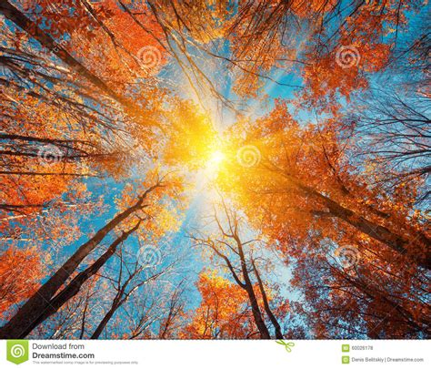 autumn forest trees pattern    blue sky
