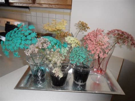 put queen annes lace flowers weeds  water  food