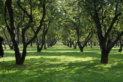 garden pictures file apple garden in kolomenskoye jpg