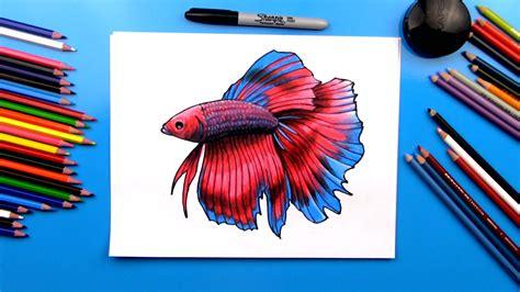 draw  realistic betta fish art  kids hub