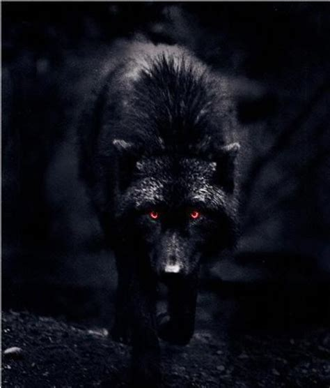 black wolf  red eyes black wolf red eyes picture
