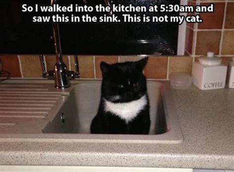 cat epidemic   cute  creepy