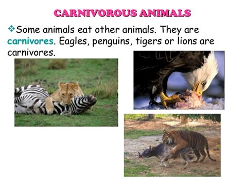 animals classification eat herbivorous plants herbivores only carnivores tigers penguins