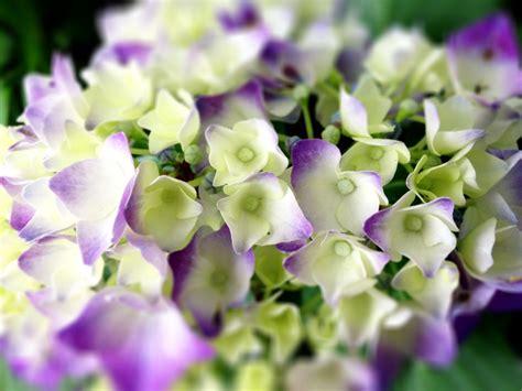 stauden für schattige plätze pflanzen f 252 r schattige pl 228 tze im garten pflanzen f r