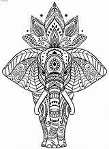 Coloring Adult Elephant Via sketch template