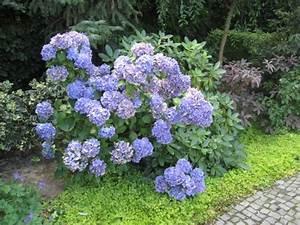 Blumen Für Schatten : pflanzen f r schattige pl tze ~ Lizthompson.info Haus und Dekorationen