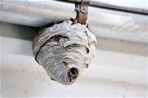 Mittel Gegen Wespen Im Dach : wespennest entfernen der richtige umgang mit wespen ~ Eleganceandgraceweddings.com Haus und Dekorationen