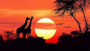African Sunset Hd Wallpapers For Mobile Phones And Pc