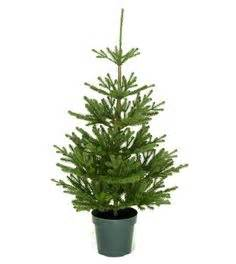 3ft everyday collections potted feel real artificial christmas tree 5ft potted pine 100 feel real artificial tree ideas tree