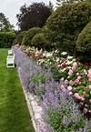 Carolyne Roehm's rose garden at Weatherstone, BEAUTIFUL rose garden