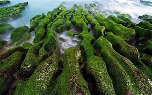 Nature, Landscape, Water, Sea, Rock, Algae, Moss, Green, Long, Exposure, Wallpapers, Hd, Desktop