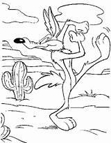 Wile Looney Tunes Getdrawings sketch template