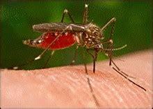 raccourcir la dur 233 e de vie des moustiques pour moins de