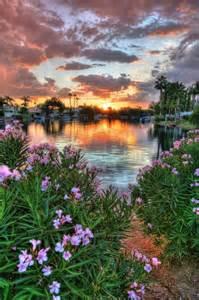 Arizona Sunset Flower