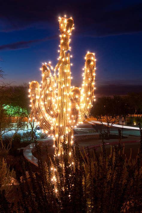 arizona christmas tree photograph  jacek joniec