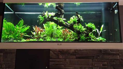 aquascaping aquarium juwel 240 plant 233