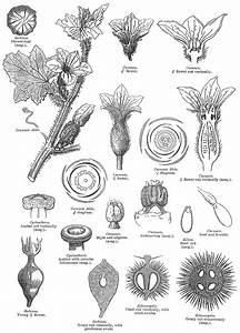 Angiosperm Families