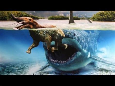megalodon der groesste hai der welt existiert noch youtube