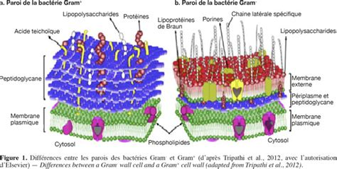 impact du sechage sur la viabilite de pseudomonas