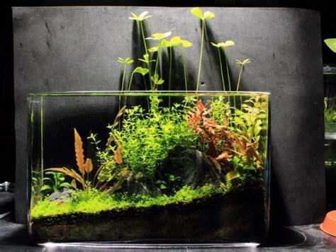 Aquascape Simple Design