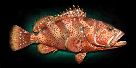 grouper mounts hind fish strawberry mount shark mako replica replicas taxidermy homestead marinecreations
