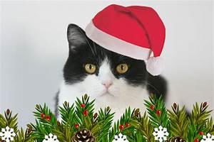 Katzen In Mietwohnung 2016 : mein weihnachtsp ckchen katzen taschenkalender 2016 ~ Lizthompson.info Haus und Dekorationen
