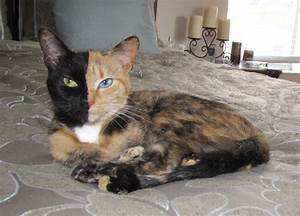 Pretty Kitty!: Chimera Cat Is Its Own Fraternal Twin ...
