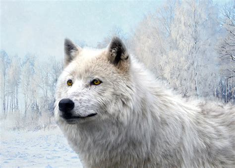 white wolf by kaito42 on deviantart