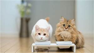 Very Cute Cats Eating Together Advice for your Home