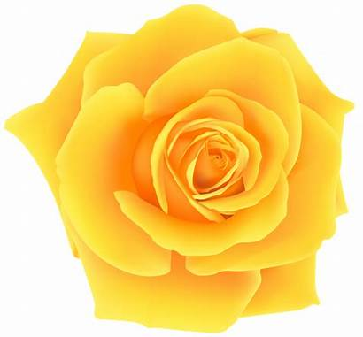 Rose Yellow Clip Clipart Flowers Roses Flower