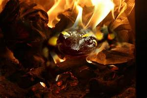 Elemental Fire: Salamander by ReanDeanna on deviantART