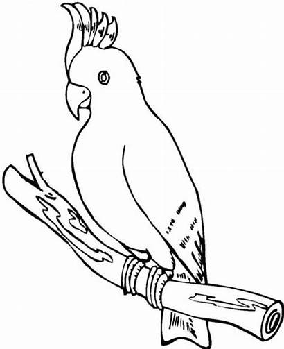 Coloring Parrot Cockatoo Pages Printable Drawing Sheets