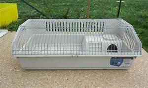 Cage A Cochon D Inde : cage 1m pour lapin ou cochon d 39 inde ~ Dallasstarsshop.com Idées de Décoration