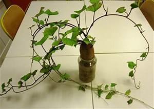 Patate Douce Plante : nos plantations coop 39 icem ~ Dode.kayakingforconservation.com Idées de Décoration