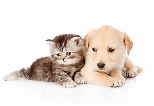 Cute Dog and Cat Wallpaper | PixelsTalk.Net