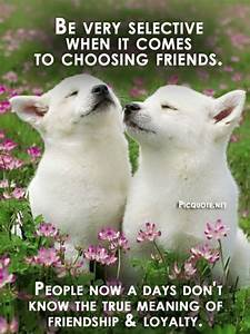 short quotes about loving dogs and cats - Google Search ...
