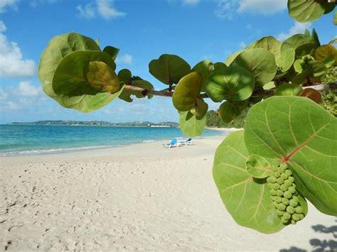 Death in Antigua and Barbuda