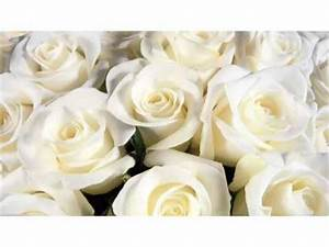 White Rose Flowers | White Flower Images And Ideas ...